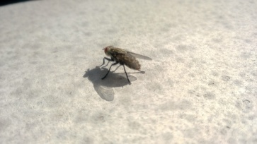 Nokia Lumia 925 - Sample Pic_Macro2